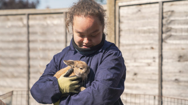 Student holding rabbit at small animals site