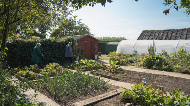 Horticulture site with rows of plant beds and a polytunnel